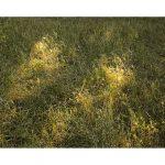 080714-parc-buttes-chaumont-20x30-28x39-Web.jpg