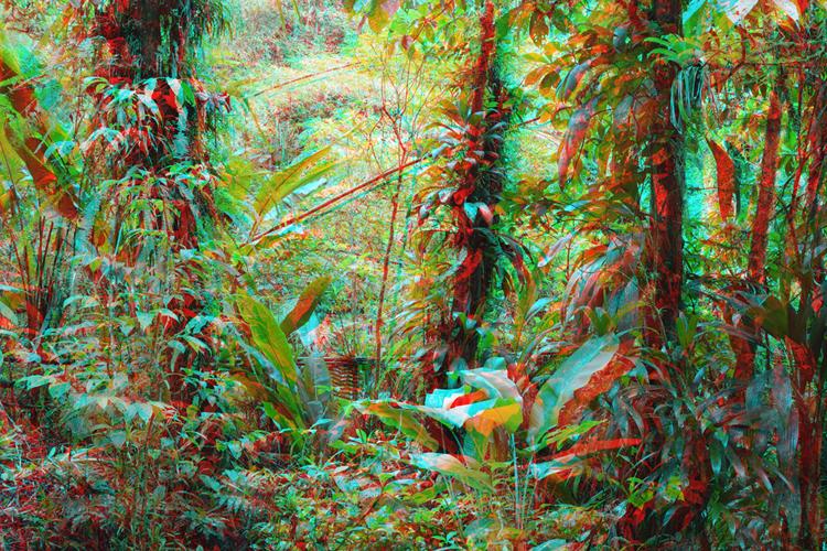 photographie 3D jungle