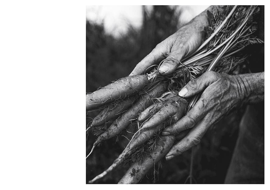 carton GM ñ mains ‡ la terre-recto-web