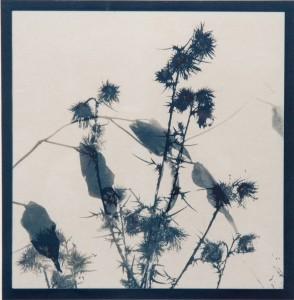 cyanotype jardin